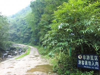 进山路 熊猫/三天前,胡军从青城后山方向进入禁止游客涉足的原始森林,欲...